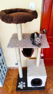 Rascador Con Casa O Casita Para Gatos
