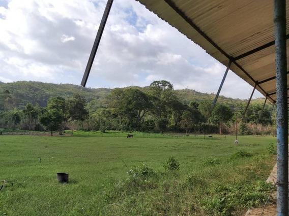 Vendo Granja En Carlos Arvelo 426093