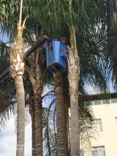 Imagem 1 de 5 de Poda E Corte De Árvores