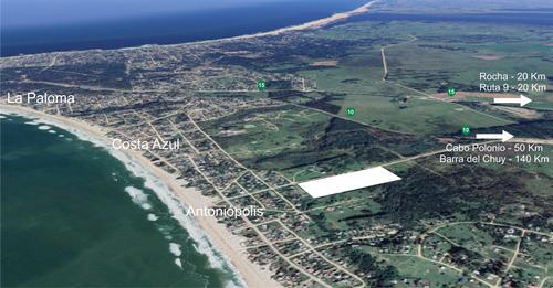 Chacra Potencial Inversión Antoniópolis La Paloma (ref. 109)