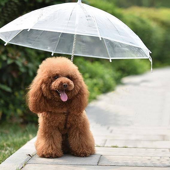 Guarda Chuva Pet Cão Guia Pela Coleira Para Cachorro