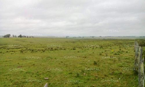 Excelente Campo De 91 Hectáreas En Venta - Lavalleja-ref:29054