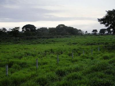 Fazenda A Venda No Pantanal De Nhecolândia - Ms (pecuária) - 761
