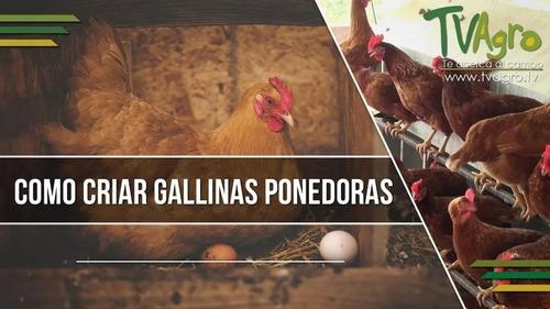 Curso Granja Avicola De Cria De Pollos & Gallinas Ponedoras