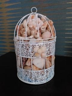 Decorativo Conchas De Mar