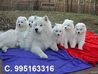 Cachorritos Y Gatitos Para Estafar A La Gente