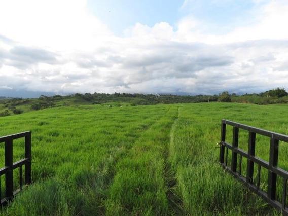 Ven A Conocer Un Hermoso Terreno Para Desarrollo Residencial