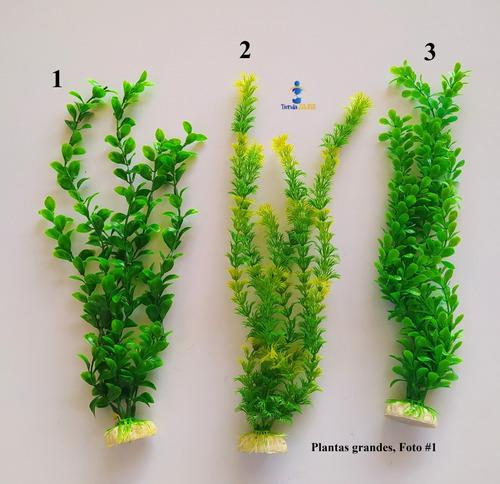 Plantas Decorativas Grande Para Acuarios
