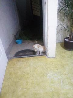 Doy En Adopción A Mi Perro