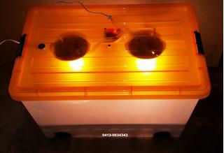 Incubadora 60 Huevos Automatica (200vrds)