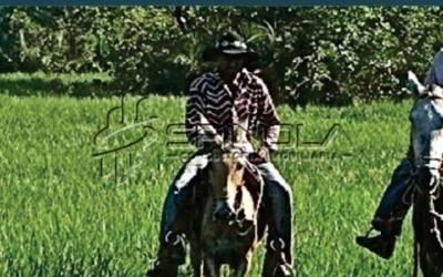 Fazenda Rural ? Venda, Fa0186. - Fa0186