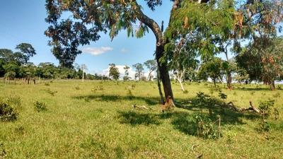 Fazenda Em Anaurilândia/ms Pecuária - 680