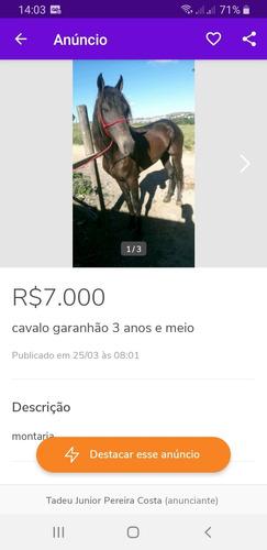 Vendo Cavalo 3 Anos E Meio Garanhão