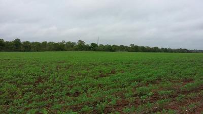 Fazenda A Venda Em Centenário - To, ( Agricultura ) - 518