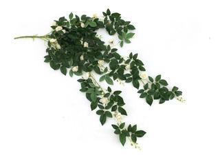 Planta Tipo Cascada/ Guía Green Line Envío Gratis 3 Pieza
