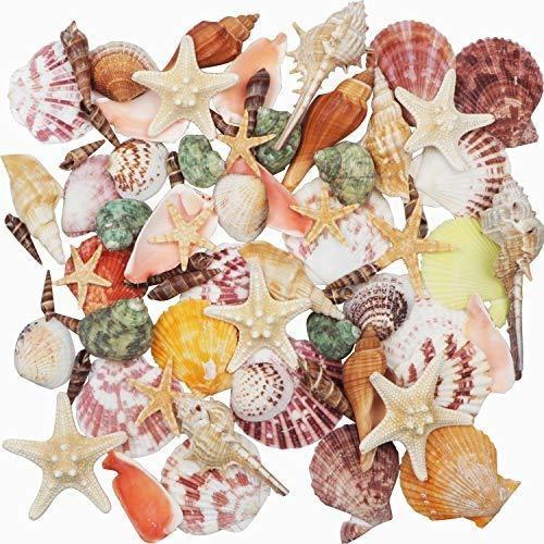 Imagen 1 de 1 de Fangoo Conchas De Mar Mixtas De Playa Conchas 9 Tipos De Con