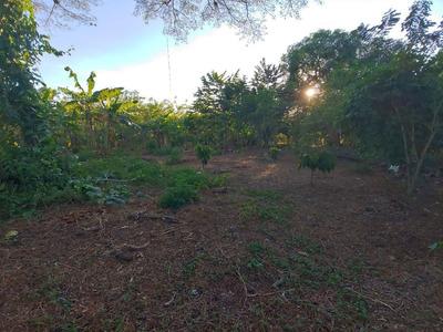 Terreno Para Agricultura Con Cacao Y Platano