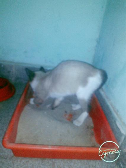 Gato Derato