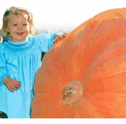 Imagem 1 de 7 de Sementes *legitimas Abobora Gigante Dills Atlantic Guinness