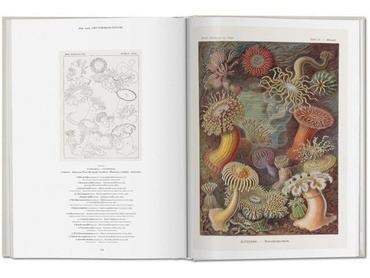 The Art And Science Of Ernst Haeckel - Haeckel, Voss Y Otros