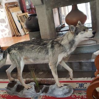 Figura Antigua De Decoración De Lobo Gigante