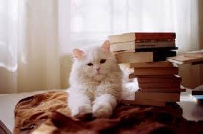 20 Livros Literatura Nacional E Estrangeira