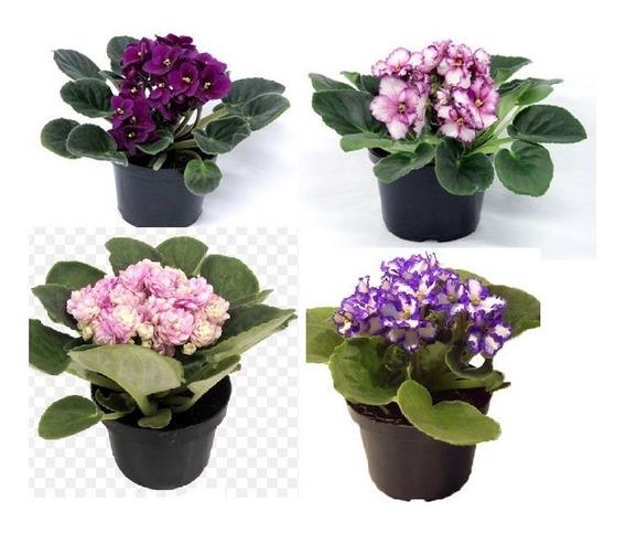500 Vasos Pote 11 Mudas Plantas Plástico Preto 430 Ml