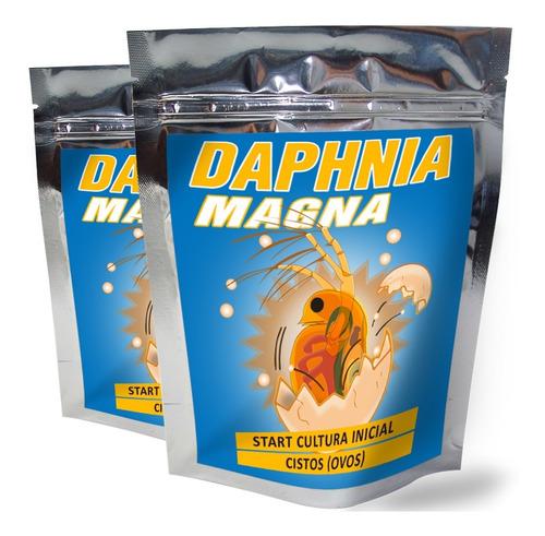 Dafnia Daphnia Magna Cultura Inicial Cistos Ovos