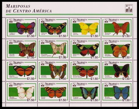 Fauna - Mariposas - Nicaragua - Hojita Mint