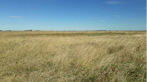 Fazenda Com 4.200 Hectares Para Lavoura E Pecuária - Rs