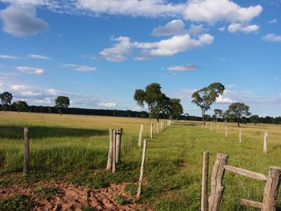 Fazenda A Venda Em Terenos-ms (pecuária) - 1116