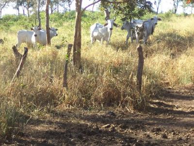 Fazenda Em Ponte Alta - To 110 Alq Terra De Cultura Pecuária - 447