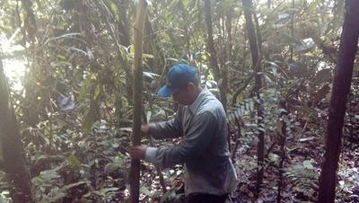 Terreno Agricola Km 45.5 Iquitos Nauta- 40 Mil Soles