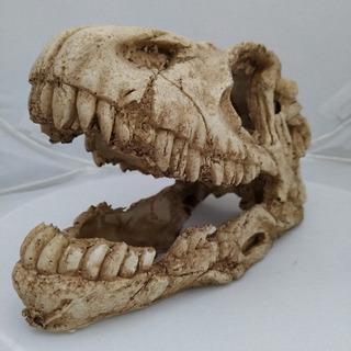 Cráneo De Dinosaurio De Resina Terrario Adorno Acuario Pecera