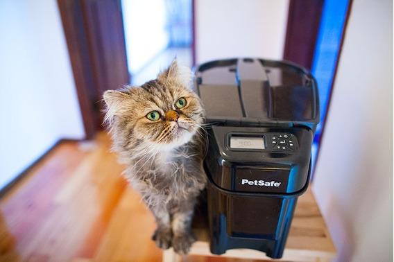 Petsafe Comedero Automático Para Mascota (gato, Perro)