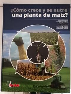 ¿cómo Crece Y Se Nutre Una Planta De Maíz?