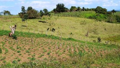 Fazenda Em Campos Lindos - To, Dupla Aptidão - 318