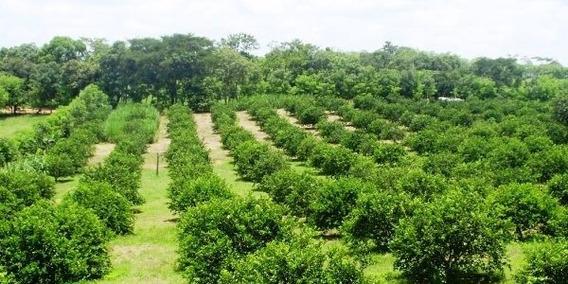 En Venta Finca En Producción De Limones Cerca De Monte Plata