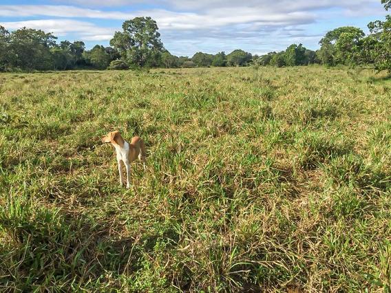 Fazenda 12.000 Hectares Mato Grosso Do Sul Cód. Fms-1
