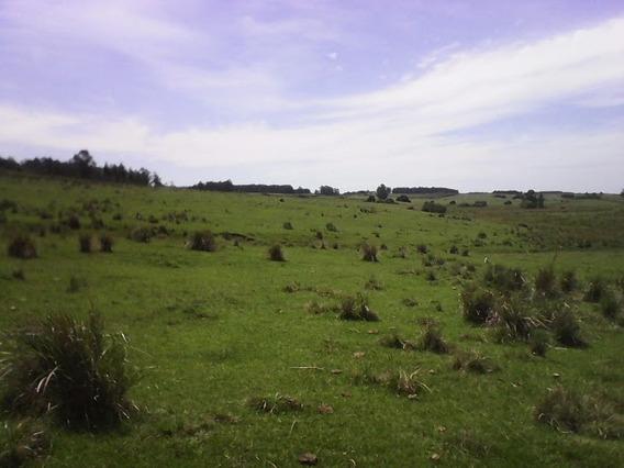 Quinta En Venta En Jose Ignacio