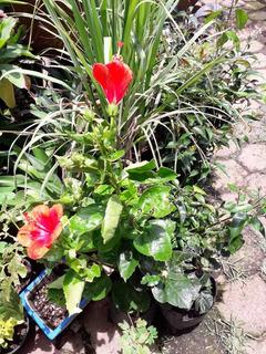 Plantas Con Flores Pack3
