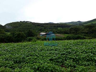 Sítio Rural À Venda, Linha Mangabeira, Santa Maria Do Oeste. - Si0010