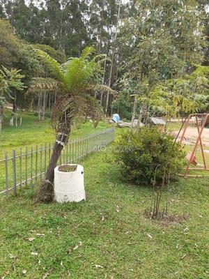 Chácara Com 4 Dormitórios À Venda, 11800 M² Por R$ 600.000 - Botiatuba - Mandirituba/pr - Ch0001