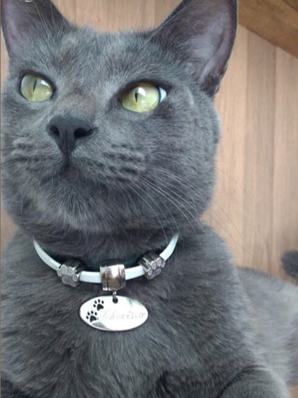 Coleira Para Gatos- Vai Gravado Nome E Telefone
