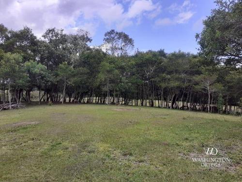 Chácara À Venda, 8500 M² Por R$ 260.000,00 - Zona Rural - São José Dos Pinhais/pr - Ch0060