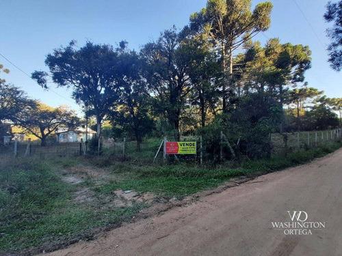 Chácara À Venda, 31000 M² Por R$ 659.000,00 - Cachoeira - São José Dos Pinhais/pr - Ch0066