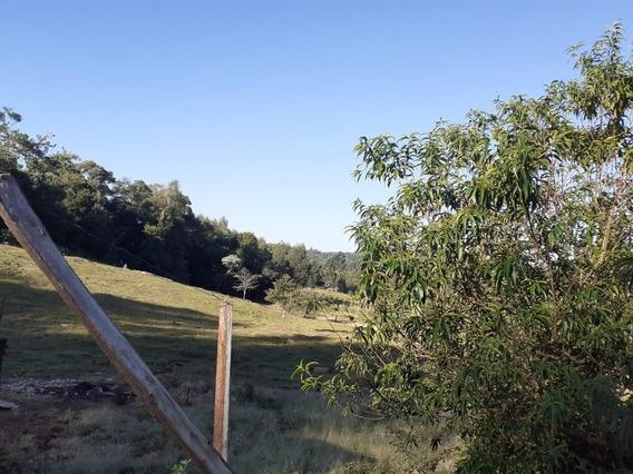 Chacra En San Pedro, Con Plantacion Y Animales - Misiones-rn