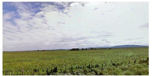 Se Vende Terreno Rustico, Villa De Casas Tamaulipas