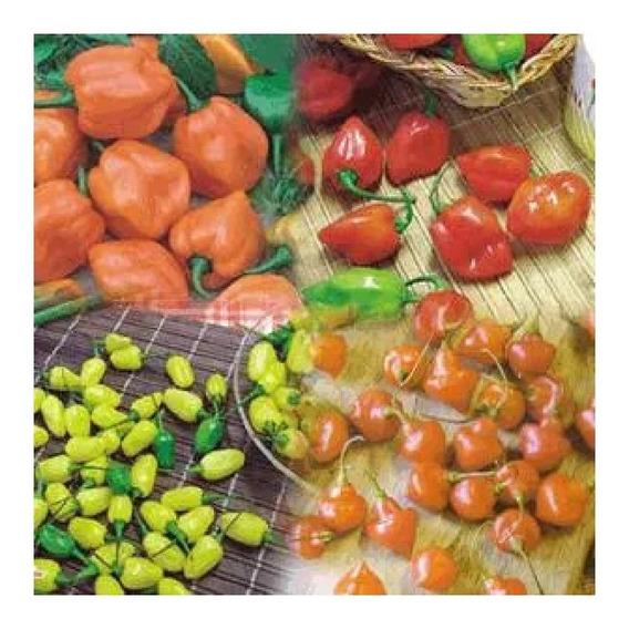 Sementes De Pimenta Kit Com 03 Variedades A Sua Escolha