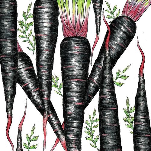 50 Semillas De Zanahoria Negra Black Nebula Variedad Criolla Mercado Libre Ya hay tiendas con zanahorias blancas, amarillas, roja oscura y. 50 semillas de zanahoria negra black nebula variedad criolla